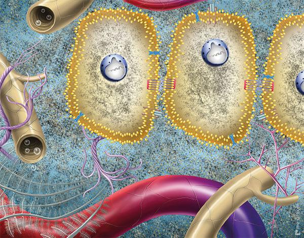 Kaputte Zellen vor Ultraschall Behandlung